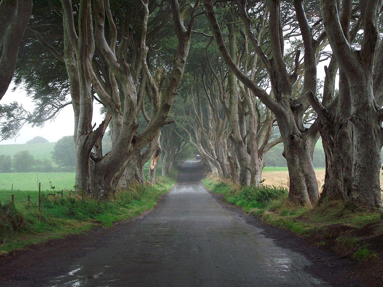 Camino Real - Irlanda