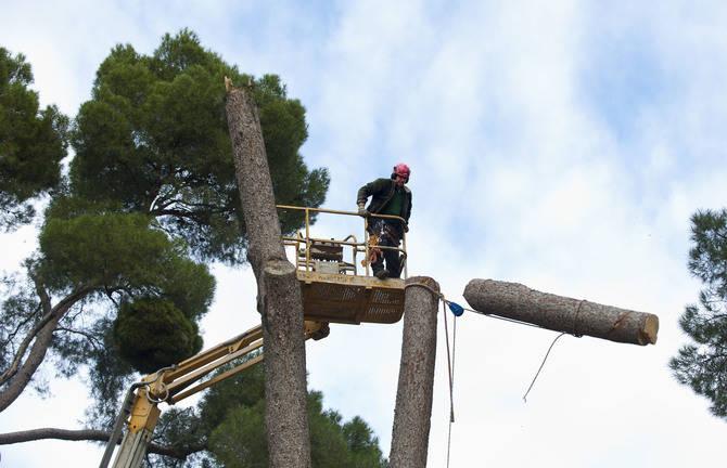 Operarios podando los árboles.  (Foto: MIguel G. Rodríguez)