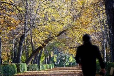 Retrata al otoño... y gana una cesta de frutas