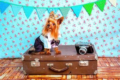 Aprender a viajar con mascotas