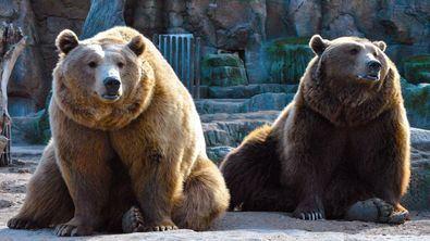 Ganadores de las entradas de Gacetas Locales para el Zoo Aquarium de Madrid