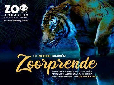 Un año más, el Zoo abrirá sus puertas a las noches de verano.