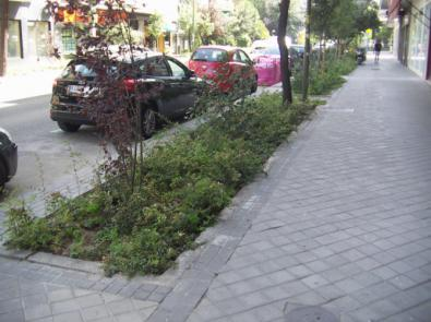 Estreno verde en Parque de las Avenidas