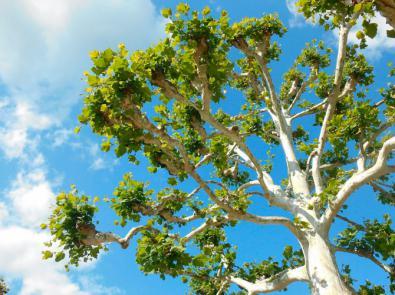 Regala un árbol y protege el planeta