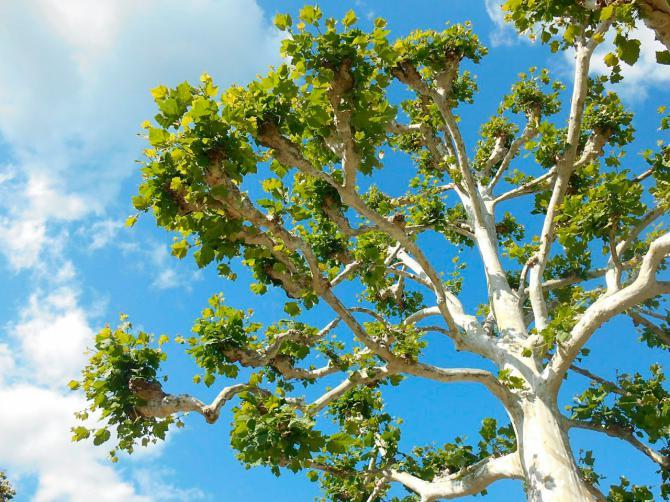 Regala un árbol y protege el planeta estas navidades