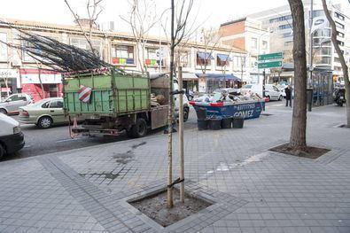 Salamanca va reponiendo sus árboles