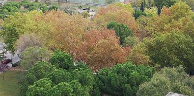 El Bosque Metropolitano del Sureste, verde en 12 años