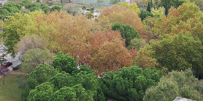 El Bosque Metropolitano plantea la plantación de 100.000 árboles.