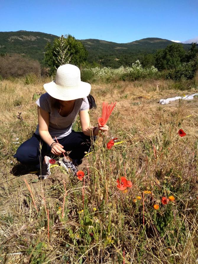 Identificadas 173 especies silvestres de cultivo en la Reserva de la Biosfera Sierra del Rincón