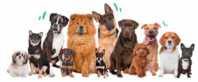 """Informe """"Los nombres de perro más populares de 2019"""" de Rover.com"""
