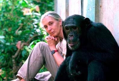 En la categoría 'Actuaciones en el Mundo', el premio se ha concedido al Instituto Jane Goodall por su dilatada trayectoria y gran impacto global en la conservación de la biodiversidad, en particular los chimpancés y sus ecosistemas en Tanzania. Jane Goodall (©) JGI