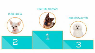 Tener un perro supone un gasto de 1.250 euros al año