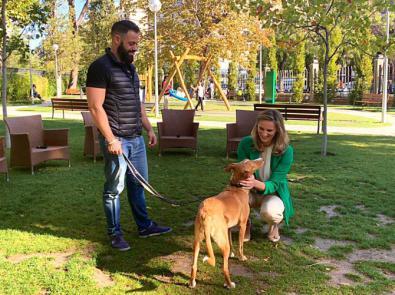 A los madrileños les gusta adoptar mascotas