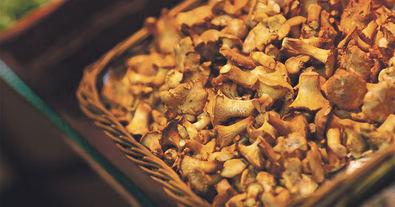 Setas de otoño: consejos para conocerlas, cocinarlas y disfrutarlas