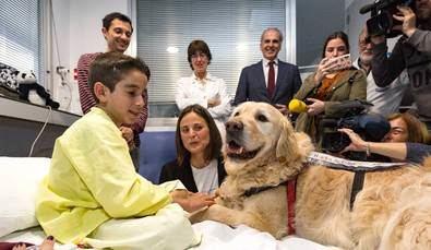 Las mascotas que ayudan a curarse