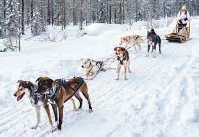 Aventura de invierno en el Círculo Polar Ártico