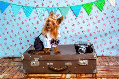 Entre los filtros más usados a la hora de elegir alojamiento 'online' está el de conocer si se permite llevar animales domésticos, por encima de conocer si disponen de wifi gratis o aparcamiento.